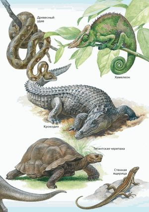 Земноводные животные и их характеристика в природе