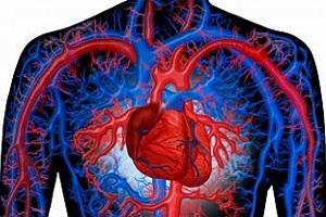 Что такое малый и большой круг кровообращения 🚩 большой и малый круг 🚩 Здоровье и медицина 🚩 Другое