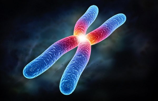 Царство микроорганизмов виды 31