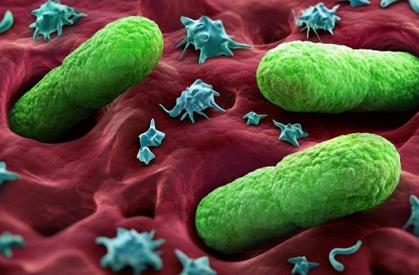 Царство микроорганизмов виды 29