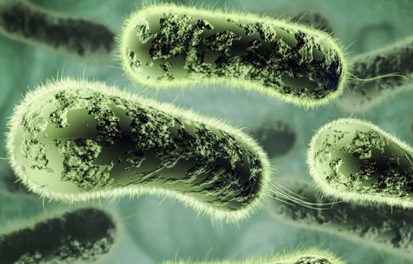 Царство микроорганизмов виды 33