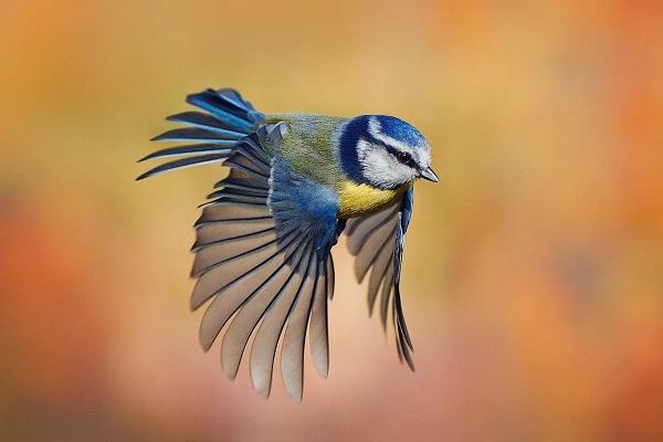 Сколько видов птиц существует