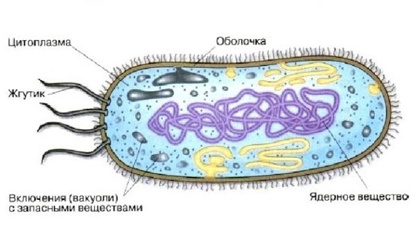 Царство микроорганизмов виды 30