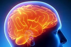 Головной мозг человека — строение и функции