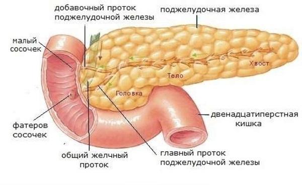 Картинка пищеварение человека