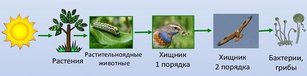 Растительноядные животные названия 3 класс