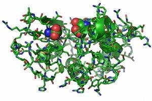 Как синтезировать белок в мышцы?