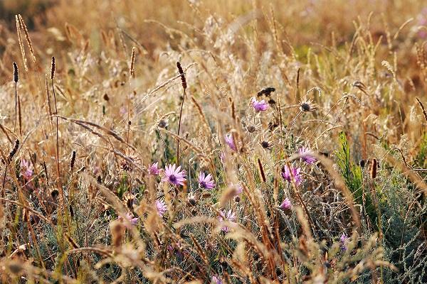 Растительный мир зоны степей