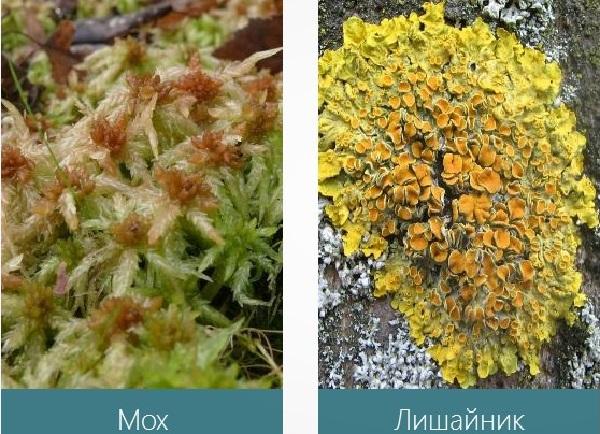 Какие растения растут в широколиственных лесах