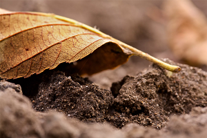 Какой вид почвы существует