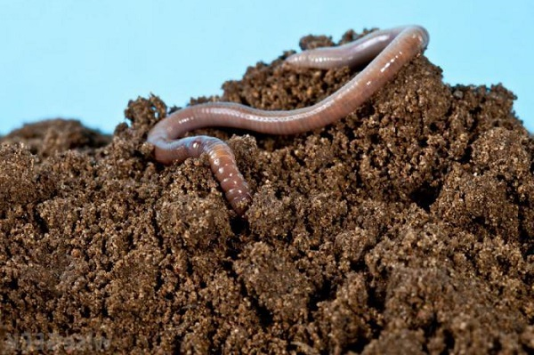 Что такое почва, состав, типы и виды, главное свойство почвы, строение, как образуется, обитатели почвенной среды, минерализация || Чем питается почва