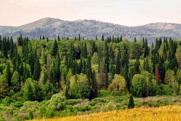 Деятельность человека в смешанных лесах россии
