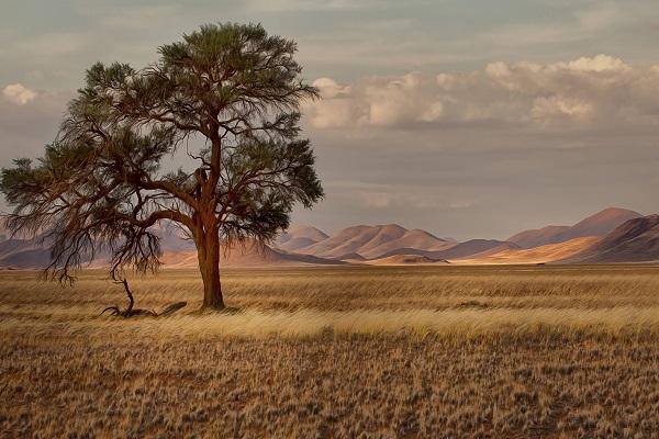 Саванны и редколесья климатический пояс