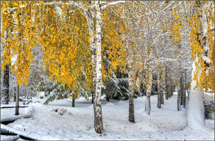 Стихи про первый снег